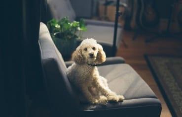 Pets-Ercise Website